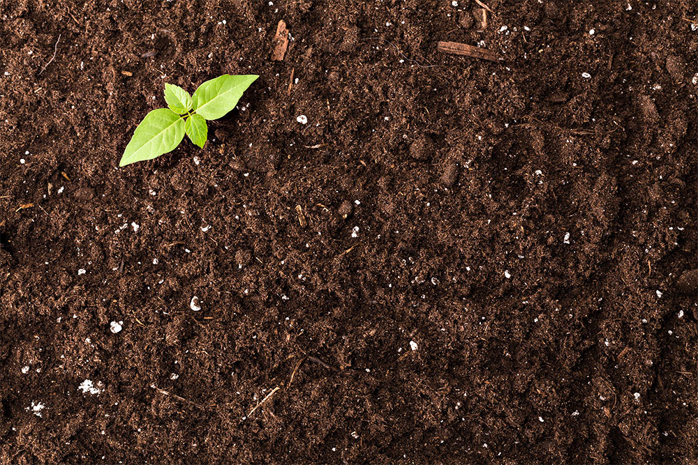 pflanze-boden